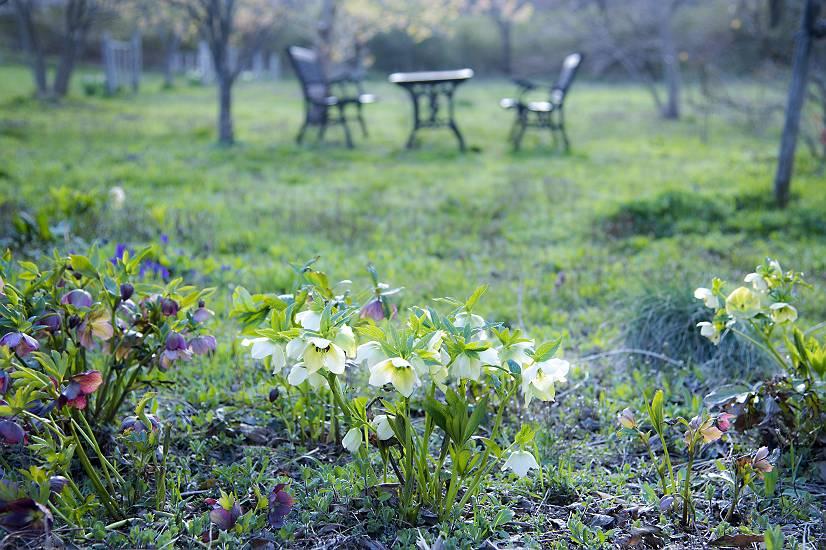 春の庭・・・cafe fua_e0271864_9171552.jpg