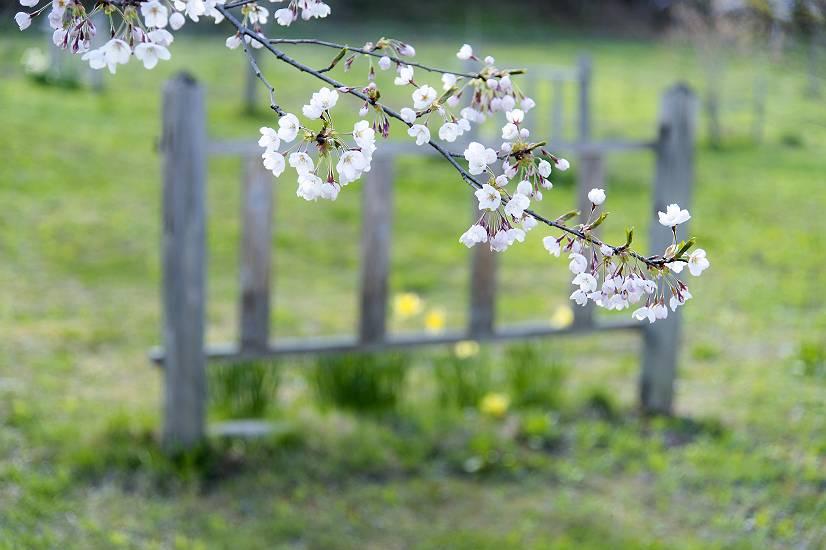 春の庭・・・cafe fua_e0271864_9172895.jpg