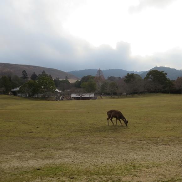 奈良から京都へ行くだけの話と無理くりアインシュタイン_c0001670_17410734.jpg