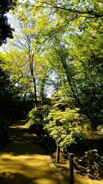 乙女山公園に散歩_c0162773_11073533.jpg