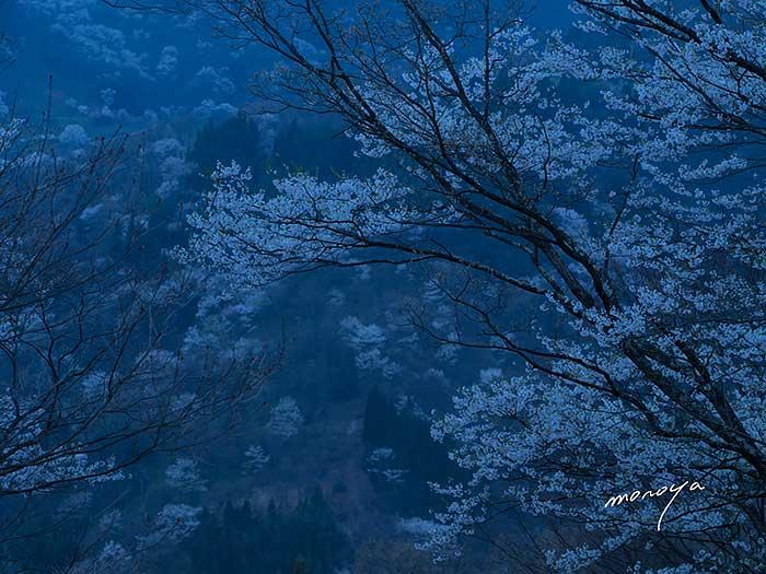 安曇野桜詣で_c0085877_5162614.jpg