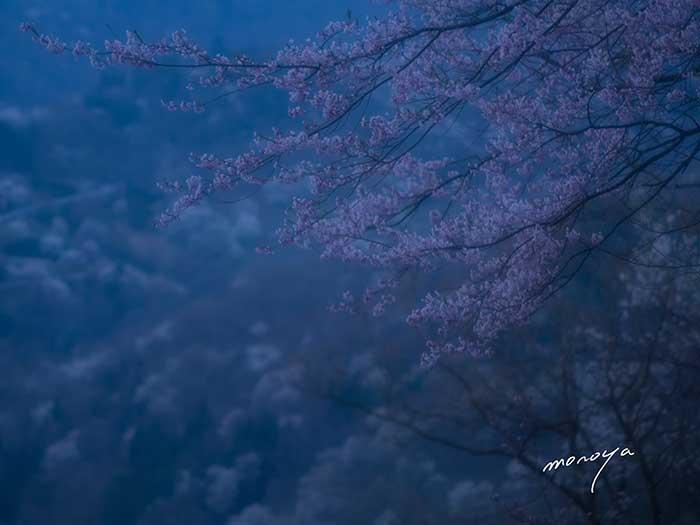 安曇野桜詣で_c0085877_5163550.jpg