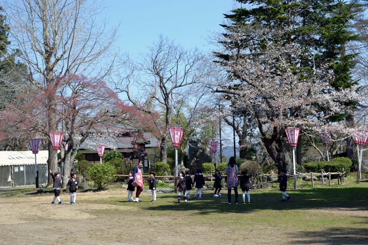 ふじ組さんは、横手公園へお花見です。_d0353789_112057.jpg