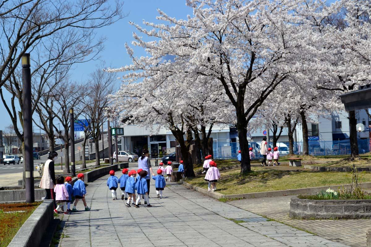 はす組さんと、もも組さんは光明寺児童公園でお花見です。_d0353789_12414913.jpg