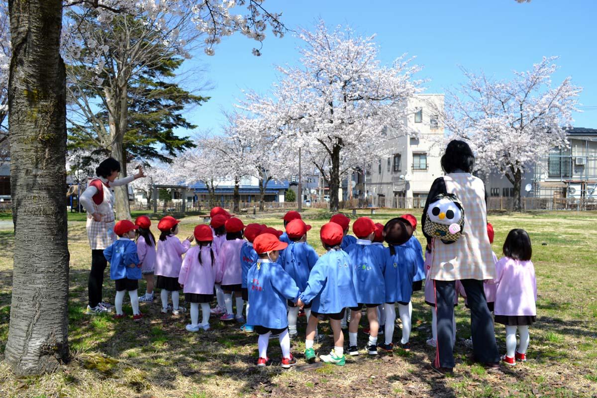 はす組さんと、もも組さんは光明寺児童公園でお花見です。_d0353789_1242115.jpg