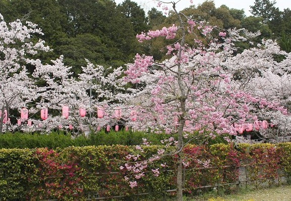 石上神宮から奈良へ_f0374092_21121017.jpg