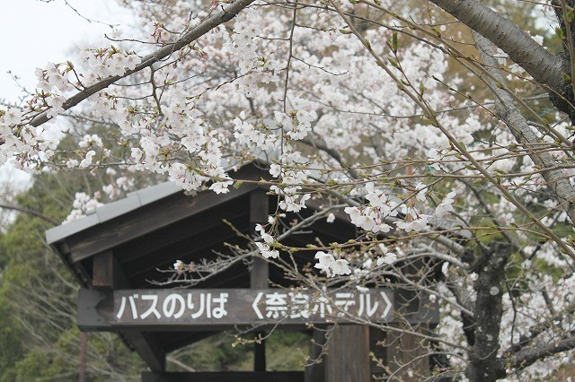 石上神宮から奈良へ_f0374092_21413949.jpg