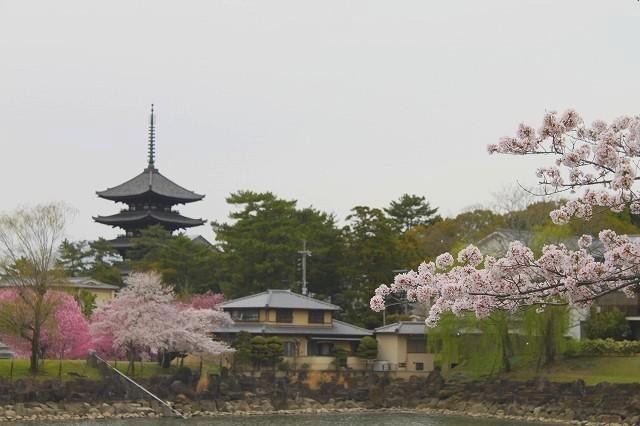 石上神宮から奈良へ_f0374092_21431856.jpg