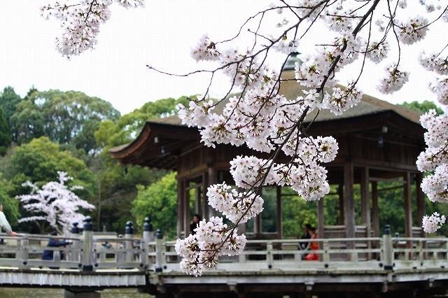 石上神宮から奈良へ_f0374092_21495301.jpg