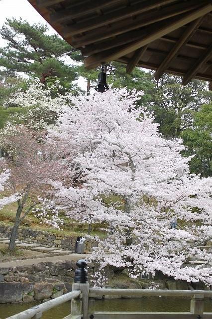 石上神宮から奈良へ_f0374092_21495676.jpg