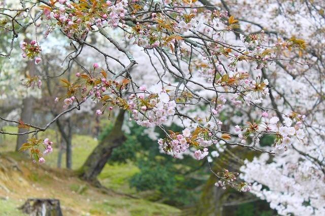 石上神宮から奈良へ_f0374092_21520606.jpg
