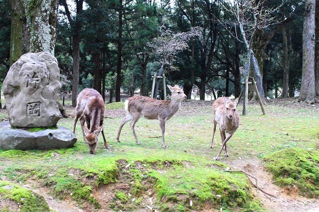 石上神宮から奈良へ_f0374092_21553254.jpg