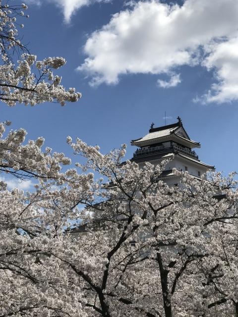 会津は桜🌸満開です!_c0145608_07364680.jpg