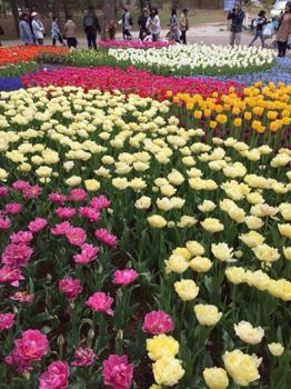 ひたちなか海浜公園では、花達が見頃を迎えています。_a0251920_116377.jpg