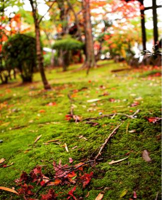 癒されたい方へ。美しい自然の風景。_d0336521_12121485.jpg