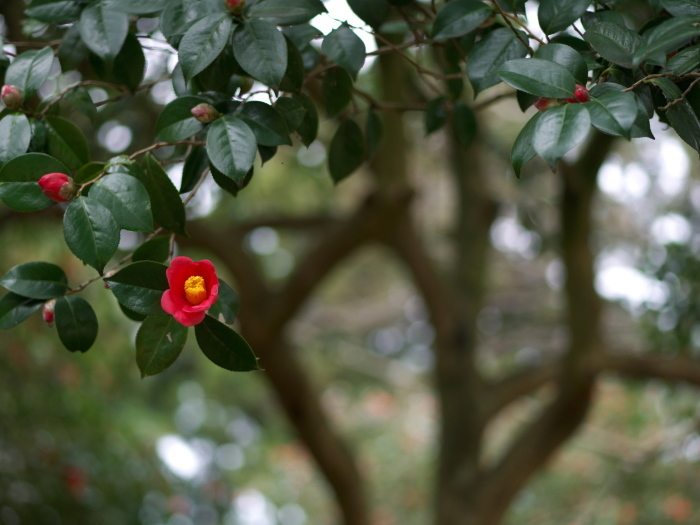 椿の森2_e0169421_20510903.jpg