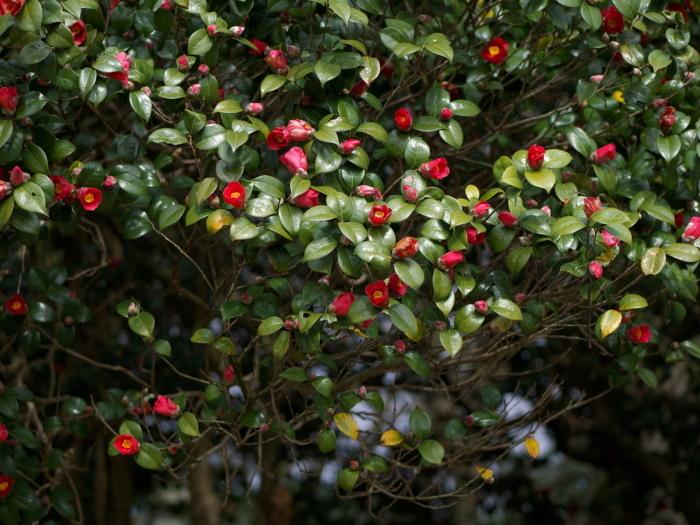 椿の森2_e0169421_20512693.jpg