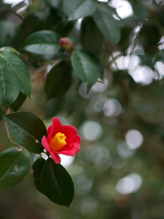 椿の森2_e0169421_20512834.jpg