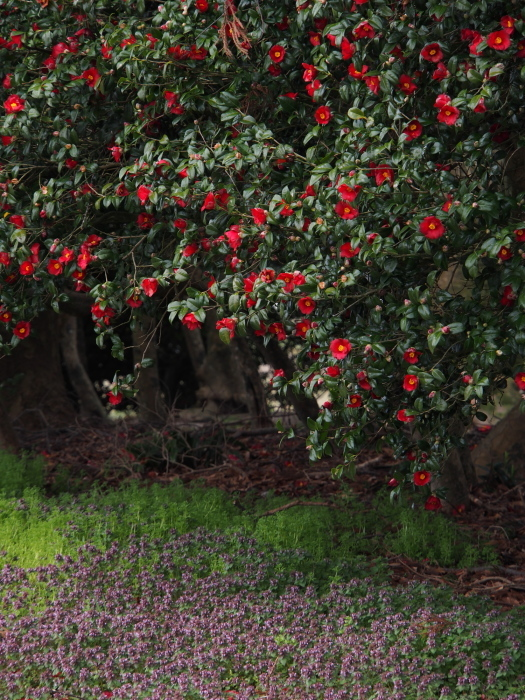 椿の森2_e0169421_20515004.jpg