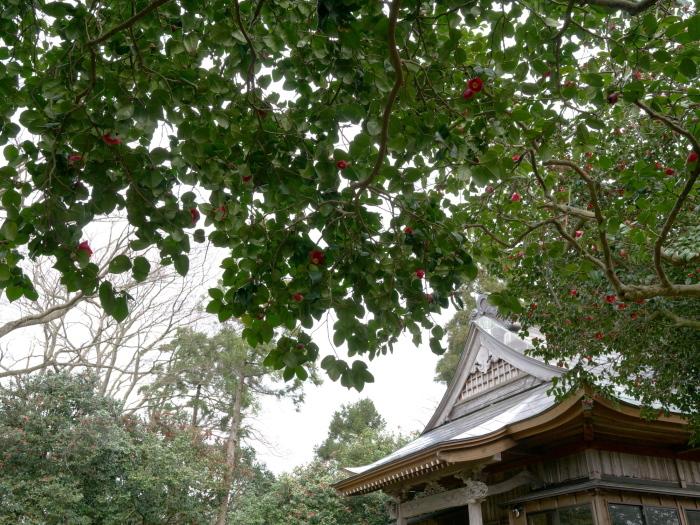 椿の森3_e0169421_21010279.jpg