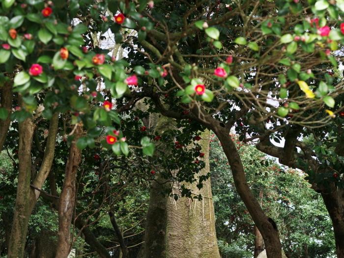 椿の森3_e0169421_21010396.jpg