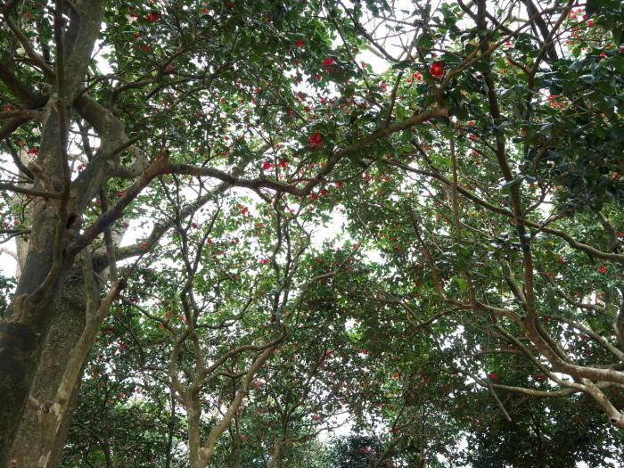 椿の森3_e0169421_21014810.jpg