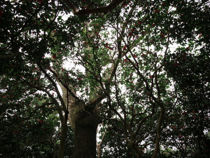椿の森3_e0169421_21030009.jpg