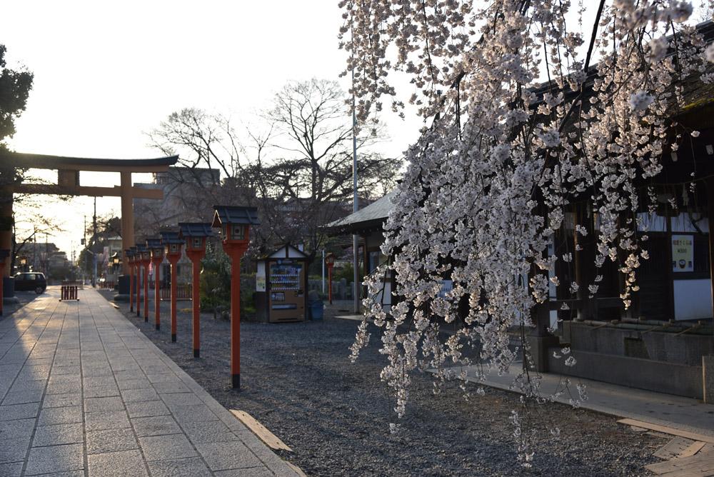 京都二日目、Ⅱ、平野神社と立本寺_e0367330_21123142.jpg