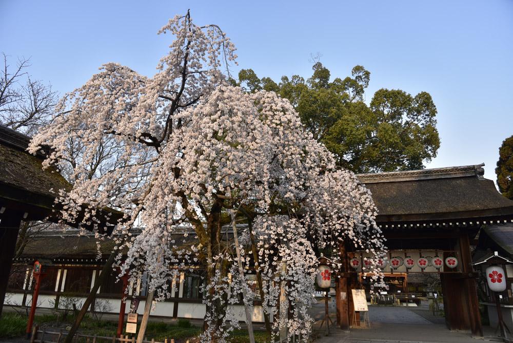 京都二日目、Ⅱ、平野神社と立本寺_e0367330_21125061.jpg