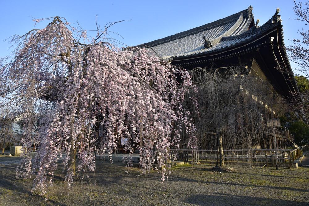 京都二日目、Ⅱ、平野神社と立本寺_e0367330_2113507.jpg