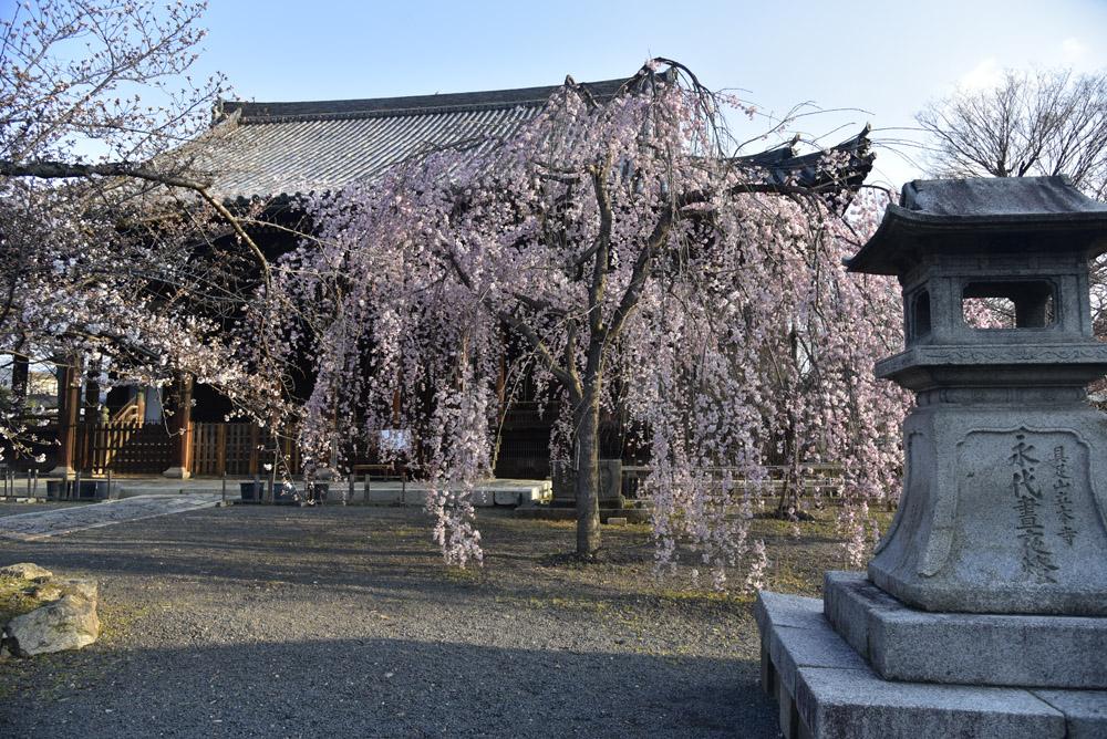 京都二日目、Ⅱ、平野神社と立本寺_e0367330_211485.jpg