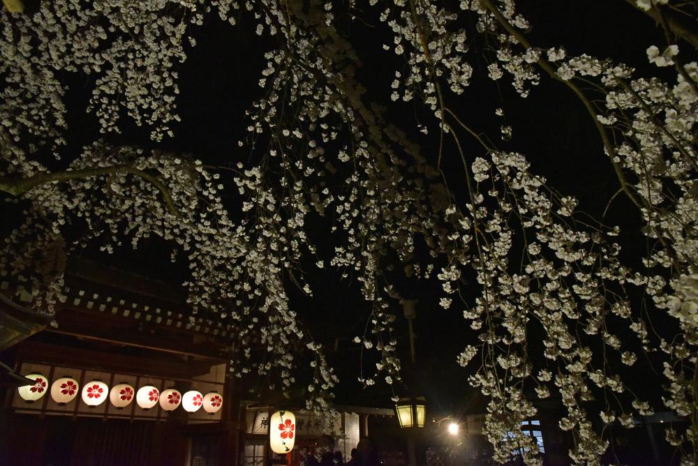 京都二日目、Ⅱ、平野神社と立本寺_e0367330_21185082.jpg
