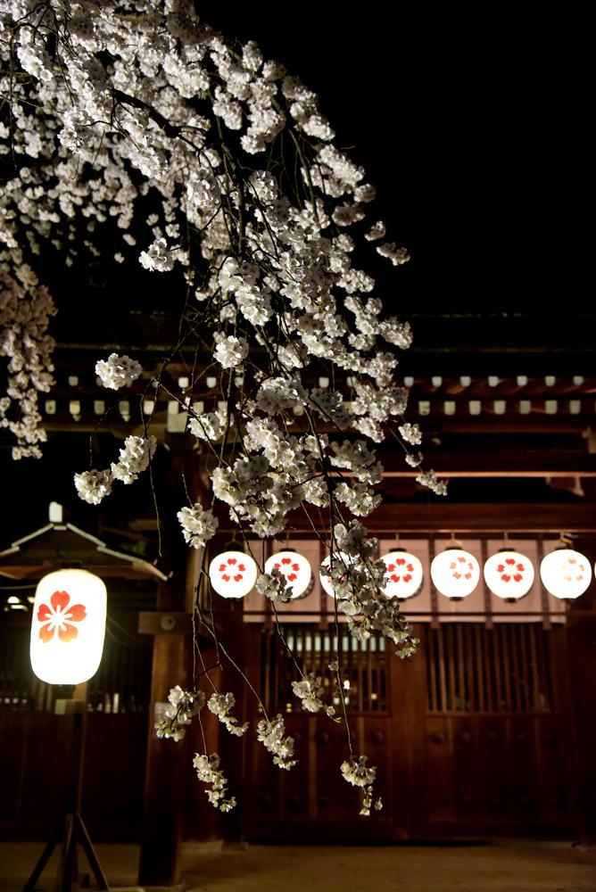 京都二日目、Ⅱ、平野神社と立本寺_e0367330_2119815.jpg
