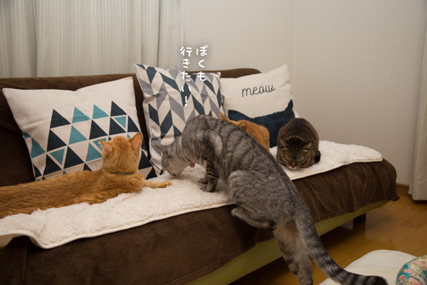 猫柄クッション_d0355333_10271396.jpg