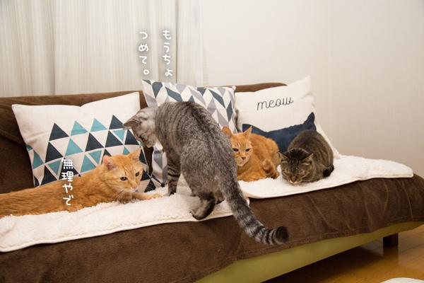 猫柄クッション_d0355333_10271550.jpg