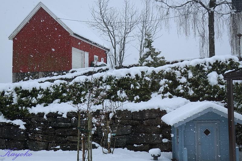 また雪_a0353839_21460377.jpg