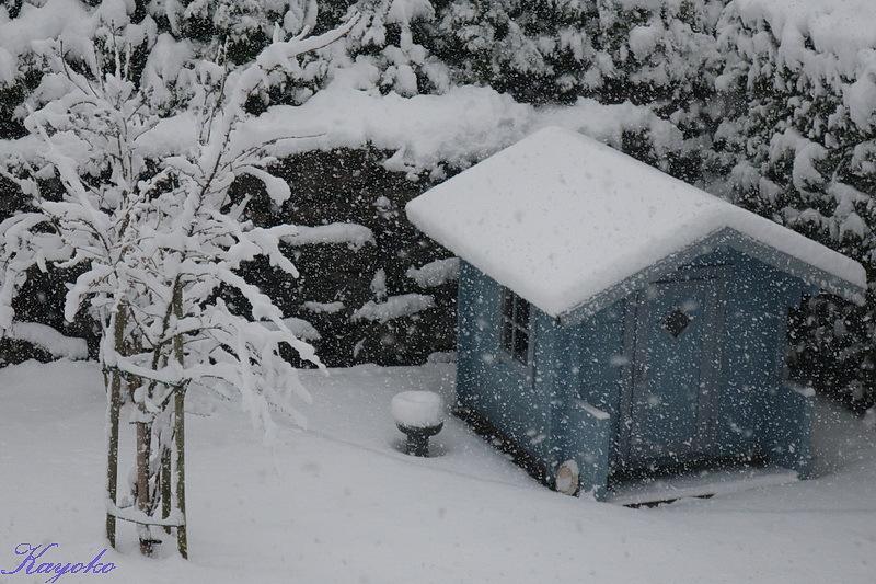 また雪_a0353839_21462838.jpg