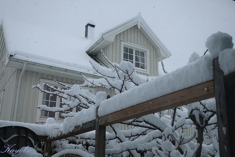 また雪_a0353839_21483784.jpg