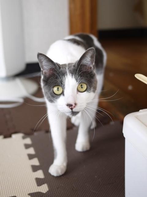 猫のお留守番 ルナくん編。_a0143140_19370276.jpg