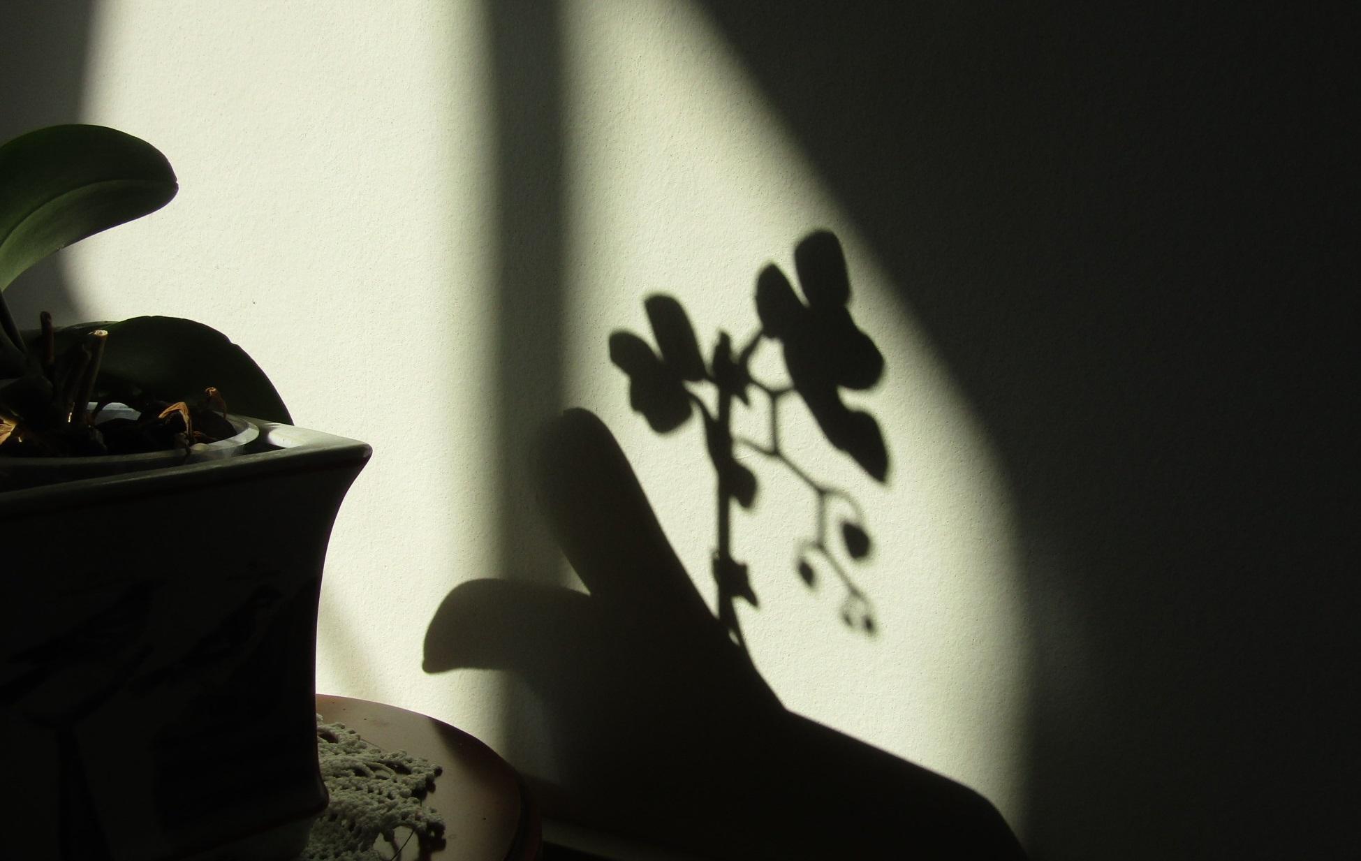 花影 ( Ombre d\'une fleur )_b0287748_4263924.jpg