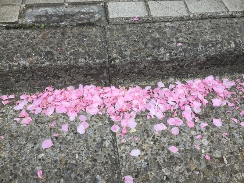 八重桜の花びら、散ってすごいことに…&4月26日(水)のランチメニュー_d0243849_23210099.jpg