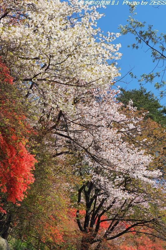 城峯山で桜とツツジを愛でる-2-_d0358854_21390917.jpg
