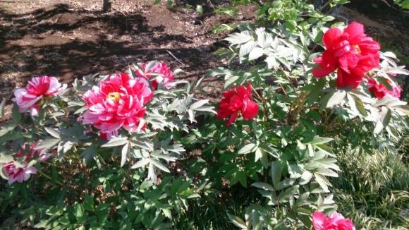 花と緑の別世界、ハナミズキの森。_d0116059_11144993.jpg