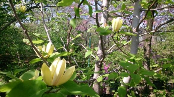 花と緑の別世界、ハナミズキの森。_d0116059_11150055.jpg