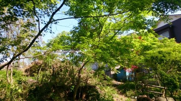 花と緑の別世界、ハナミズキの森。_d0116059_11173167.jpg