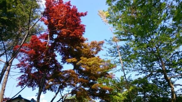 花と緑の別世界、ハナミズキの森。_d0116059_11173598.jpg