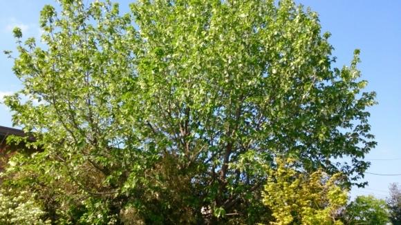 花と緑の別世界、ハナミズキの森。_d0116059_11174806.jpg