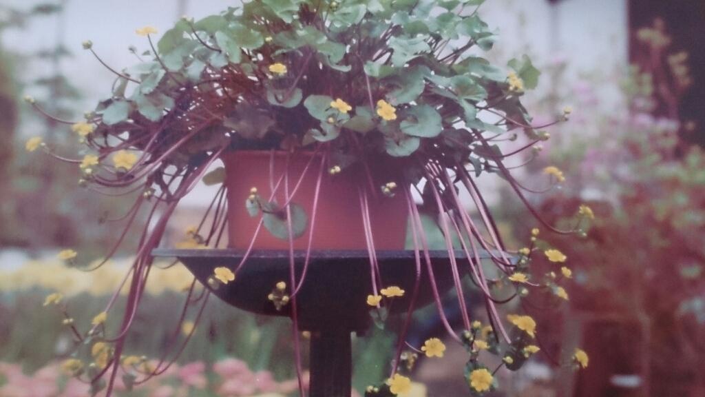 花と緑の別世界、ハナミズキの森。_d0116059_11312130.jpg