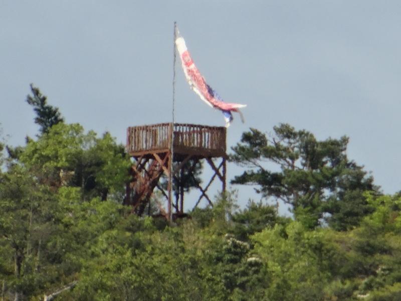 立枯れヤマザクラ伐採&搬送・・・孝子の森  by  (TATE-misaki)_c0108460_20301012.jpg