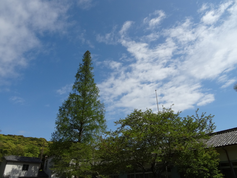 立枯れヤマザクラ伐採&搬送・・・孝子の森  by  (TATE-misaki)_c0108460_20303347.jpg